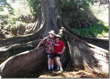 Banyan Tree, Allerton Gardens